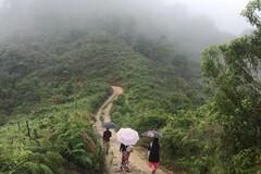 Incontra il sud della Colombia e il suo caffè