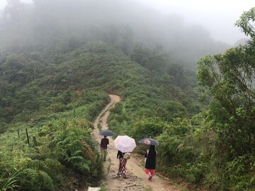 Lernen Sie den Süden Kolumbiens und seinen Kaffee kennen