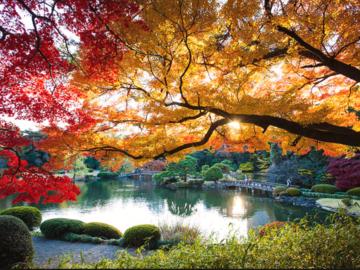 Kostenlose Tour Shinjuku Gyoen National Garden (Tokio)