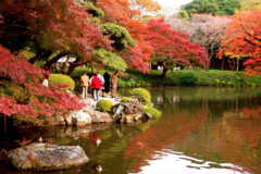 Free tour Jardines Koishikawa-Korakuen y Tokyo Dome