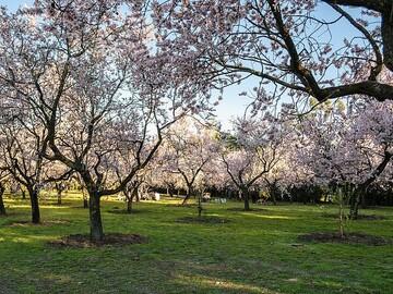 Visita guidata alla Quinta de los Molinos a Madrid