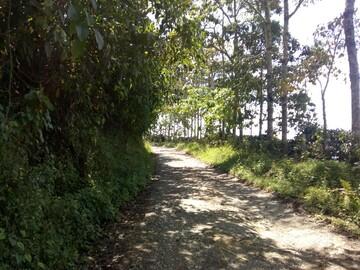 Free Tour through the La Guaca trail