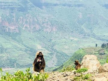 Esplora le attrazioni naturali e culturali di Addis Abeba!