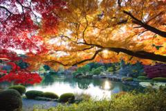 Free tour Jardín Nacional Shinjuku Gyoen (Tokio)
