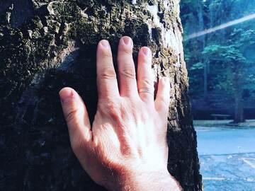 Shinrin-Yoku Granada Free Tour: bagno nella foresta ed esperienza di benessere. Riconnettiti con ...