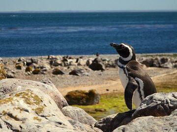 Port Desire, Patagoniens bestgehütetes Geheimnis!