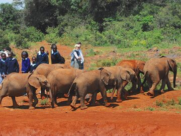 Free walking tour Nairobi - Nature walks
