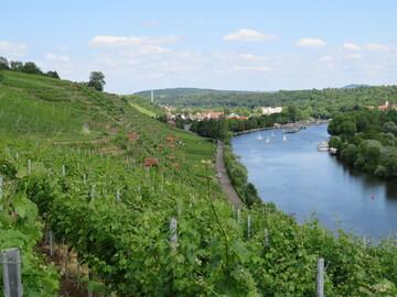 Free tour por los viñedos de Stuttgart
