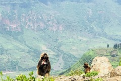 Explore the Natural and Cultural Attractions of Addis Ababa!